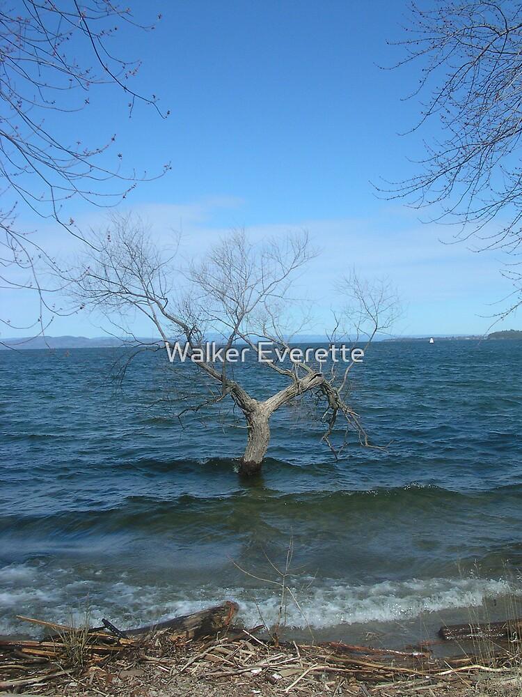 Tree in Lake Champlain by Walker Everette
