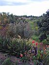 Kula Lodge Gardens by Cathy Jones