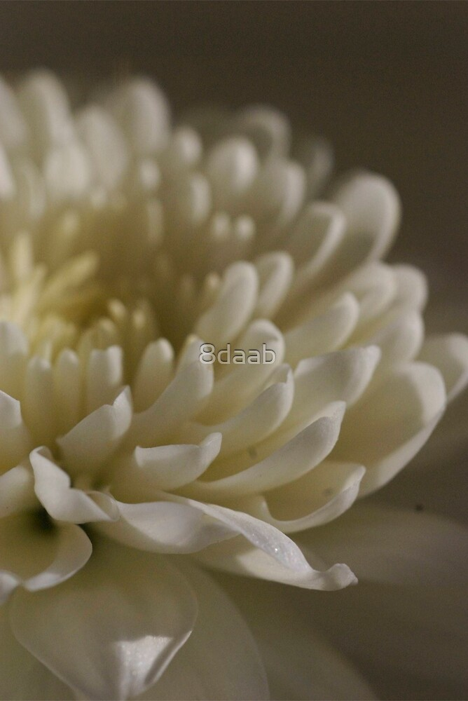 Delicate  white by 8daab