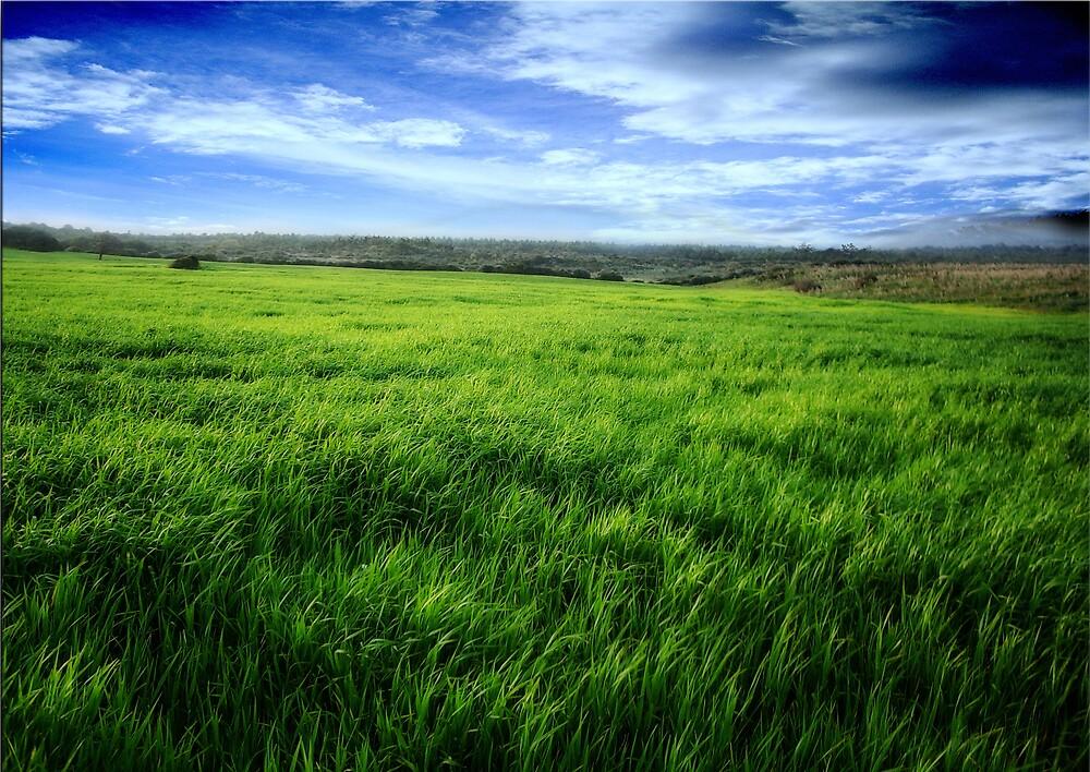 GREEN SEA by karmadesigner