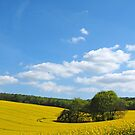 Springtime in the Meon Valley by Alex Cassels