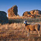 0335 Help I'm lost - Dog Rocks by Hans Kawitzki