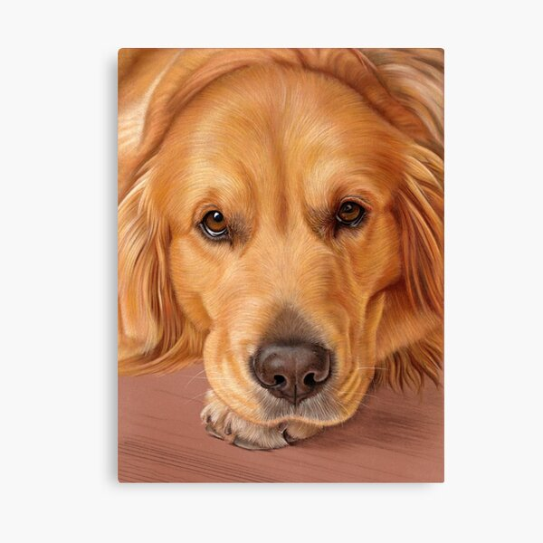 Golden Retriever Portrait - Sweet as Honey Canvas Print
