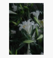 Lillies Lillies Lilles Photographic Print