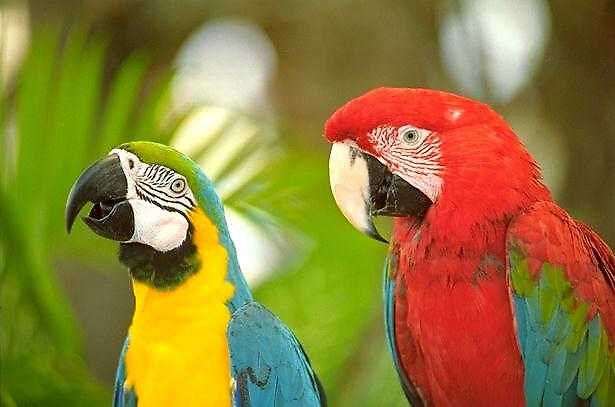 MACAWS by cap10mike