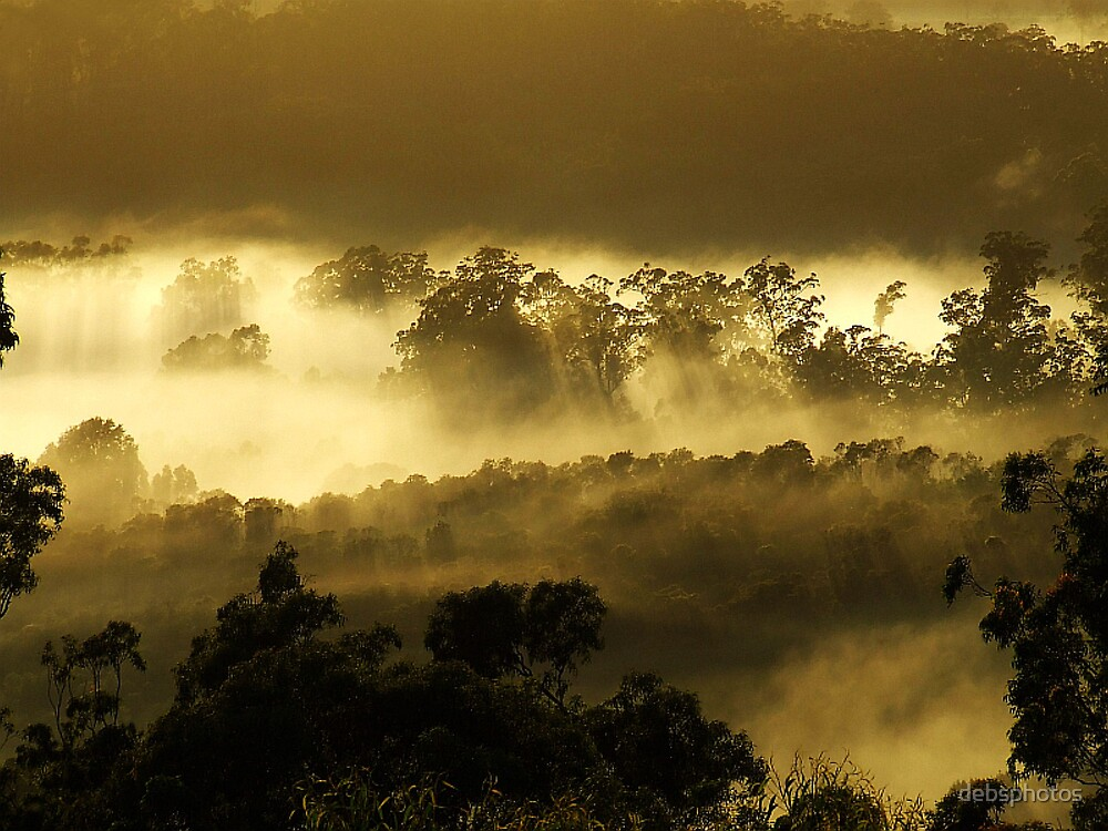 Sunstreaked Mist.......... by debsphotos