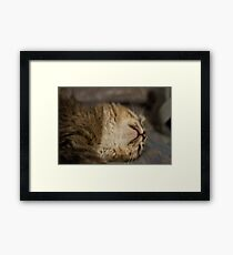Cute sleeping kitten Framed Print