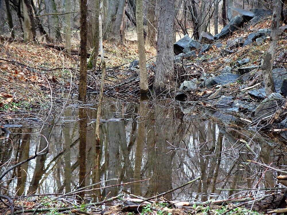 Muddy puddle reflections by Judi Taylor