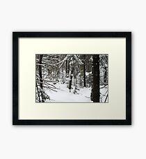Still Winter :) Framed Print