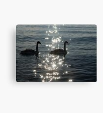 A Singing Pair of Trumpeter Swans  Canvas Print