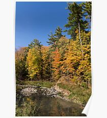 Autumn on the Riverbank - the Changing Forest Poster
