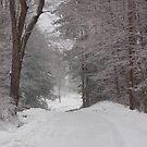 Rural Road in Snow Storm by Sarah McKoy