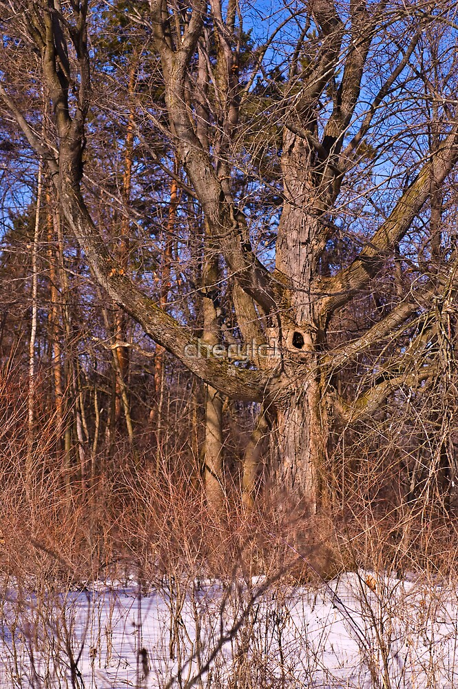 The Tree by cherylc1