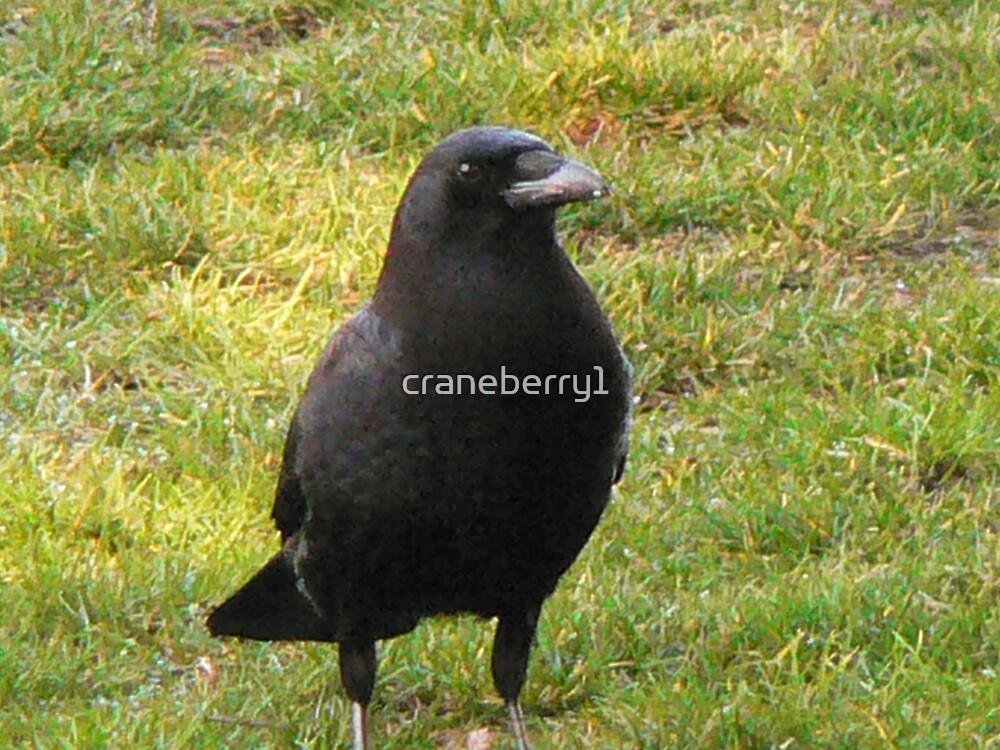 Raven by craneberry1