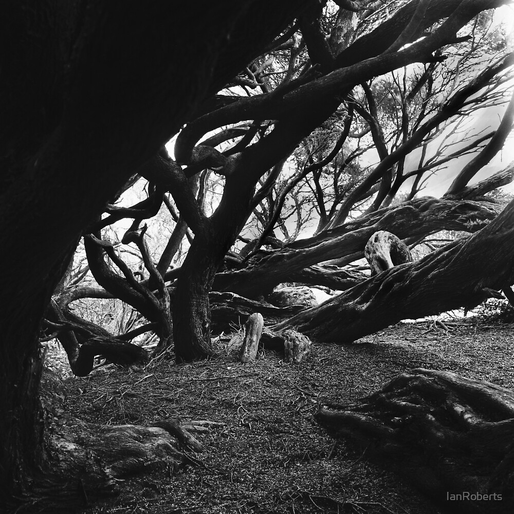 Plottings 10 by IanRoberts