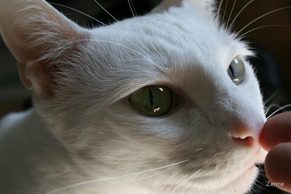 Curious cat by Zenne