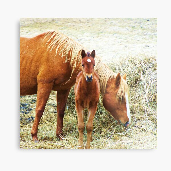 Mama and Little One Metal Print