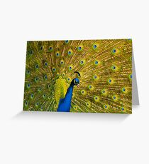 Peacock II Greeting Card