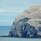 The other side of the Bass Rock by Jennifer J Watson