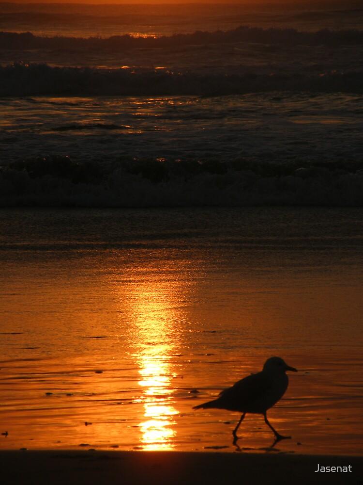 Sunset Seagull by Jasenat