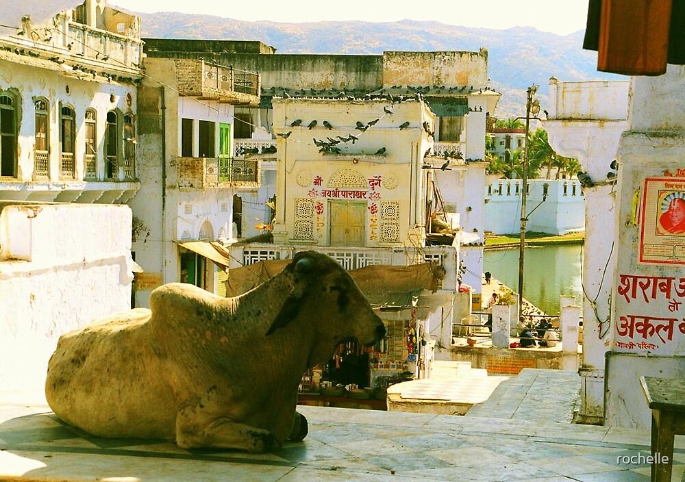 Pushkar, India by rochelle