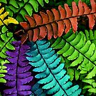 Feel The Fern by Jessica Manelis