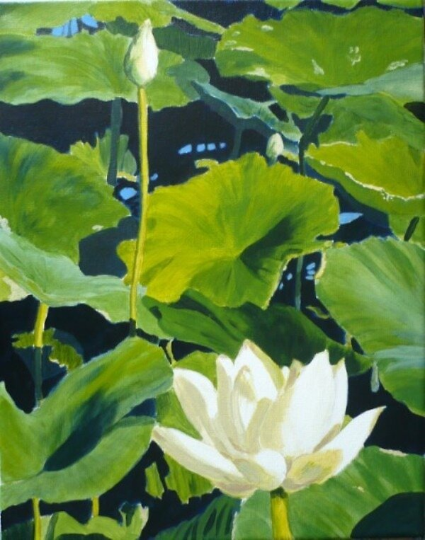 Moline Water Lilies by Susan LeMay RN