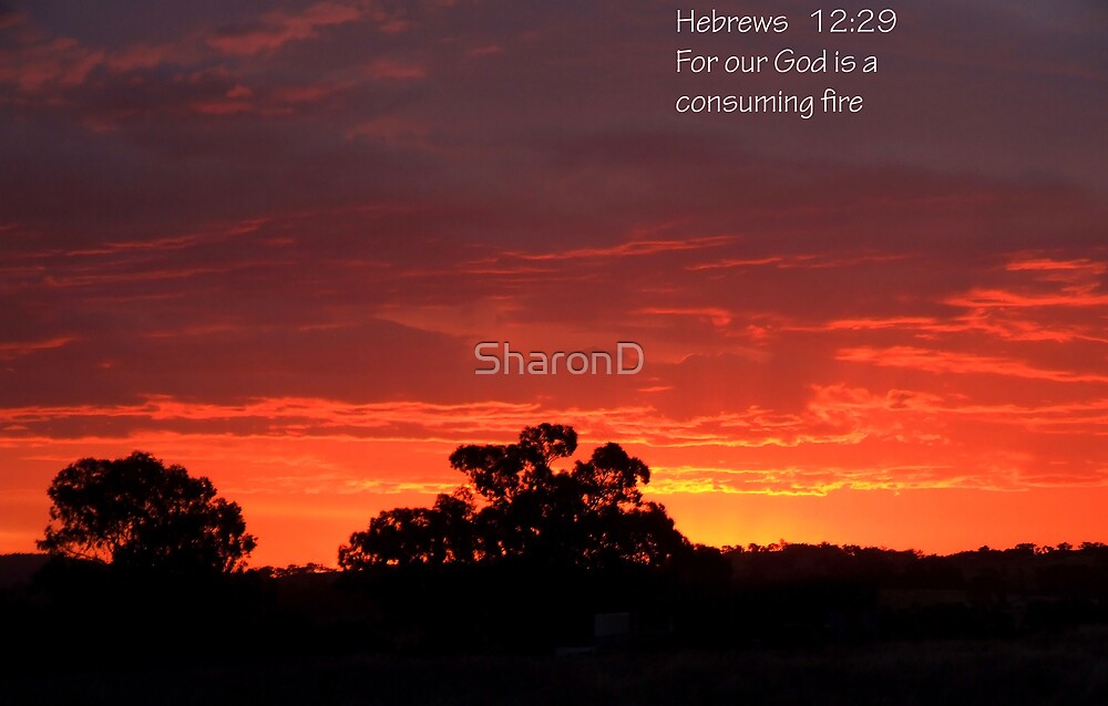 Fire Sunset by SharonD