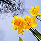 Spring by Deri Dority