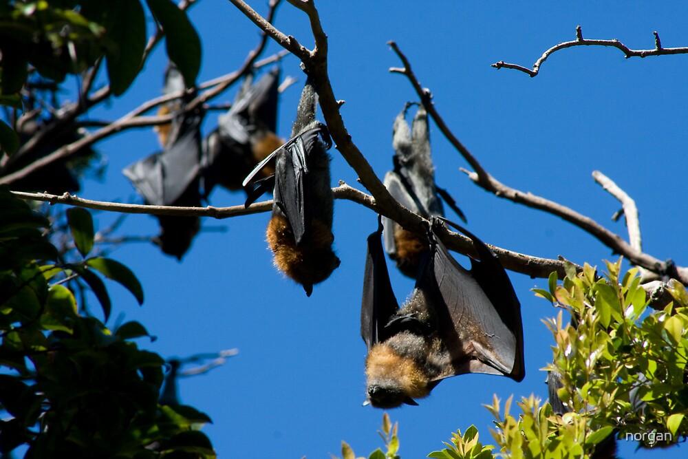 Batty by norgan