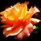 *Avatar/Full ROSE - Enchanted Flowers*