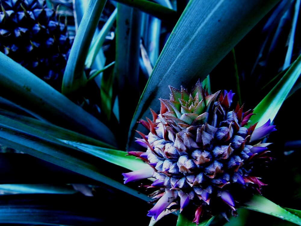 bebe pineapples by Aimerz
