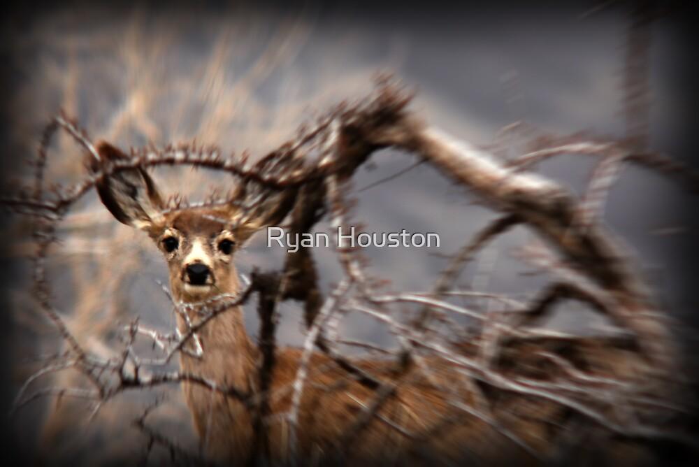 Mule Deer by Ryan Houston
