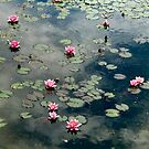Water Lilies 1 by Christine  Wilson