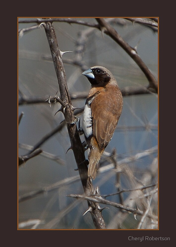 Brown is Beautiful Too by Cheryl Robertson