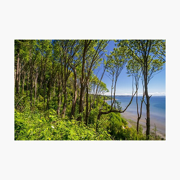 Forests on a Bluff Over the Sound Photographic Print