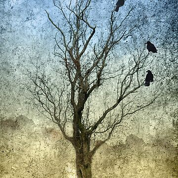 Three Crows by declancarr