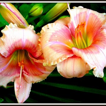 Glorious Lilies by GraciousSword