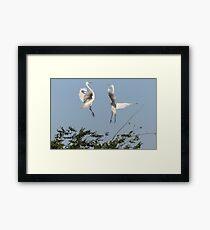 Dancing Egrets 2017-1 Framed Print