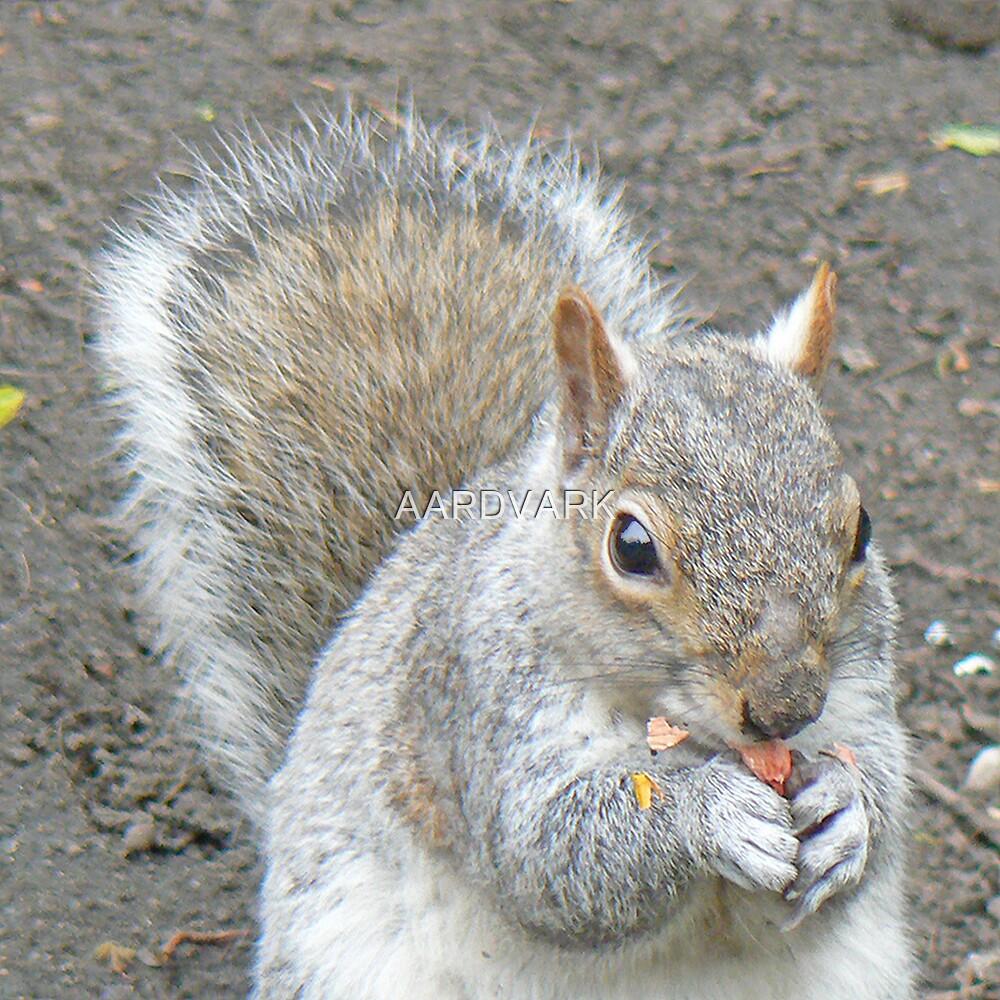 A Squirrel by AARDVARK