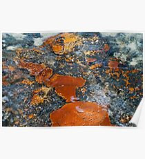 Stromatolites of Shark Bay Poster