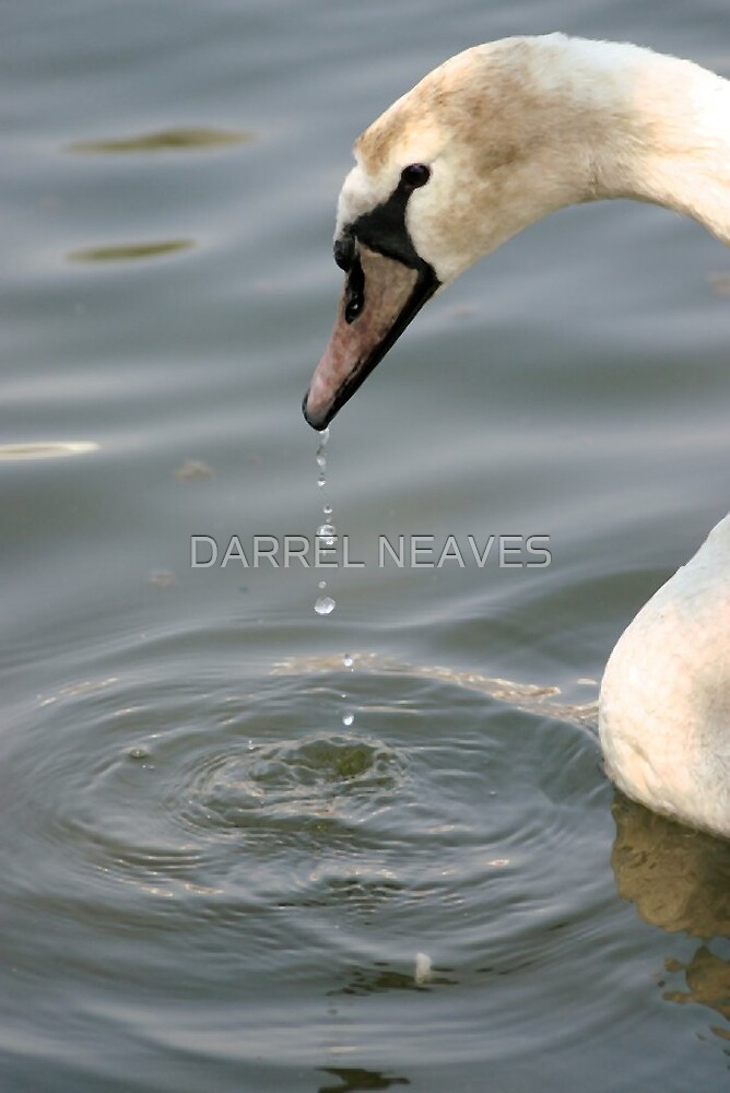 THE SWAN by DARREL NEAVES