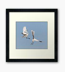 Dancing Egrets 2017-2 Framed Print