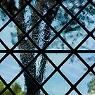 The Garden Through Window Diamonds by Georgia Mizuleva