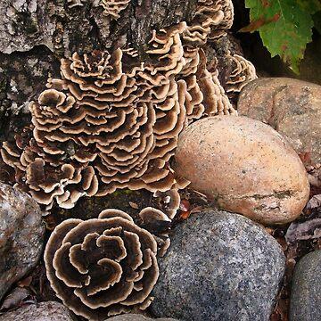 Fabulous Fungi - 2 by GraciousSword