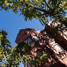 Framing the Ornate Pink House - Washington, DC Dupont Circle Neighborhood  by Georgia Mizuleva