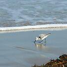 Beach Comber by Bill Morgenstern