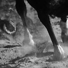 Horse 0916 by João Castro