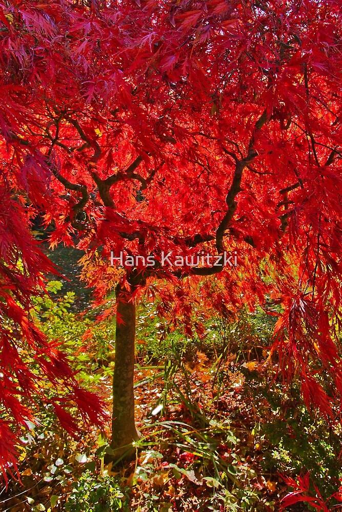 0374 Autumn red - Mount Macedon by Hans Kawitzki