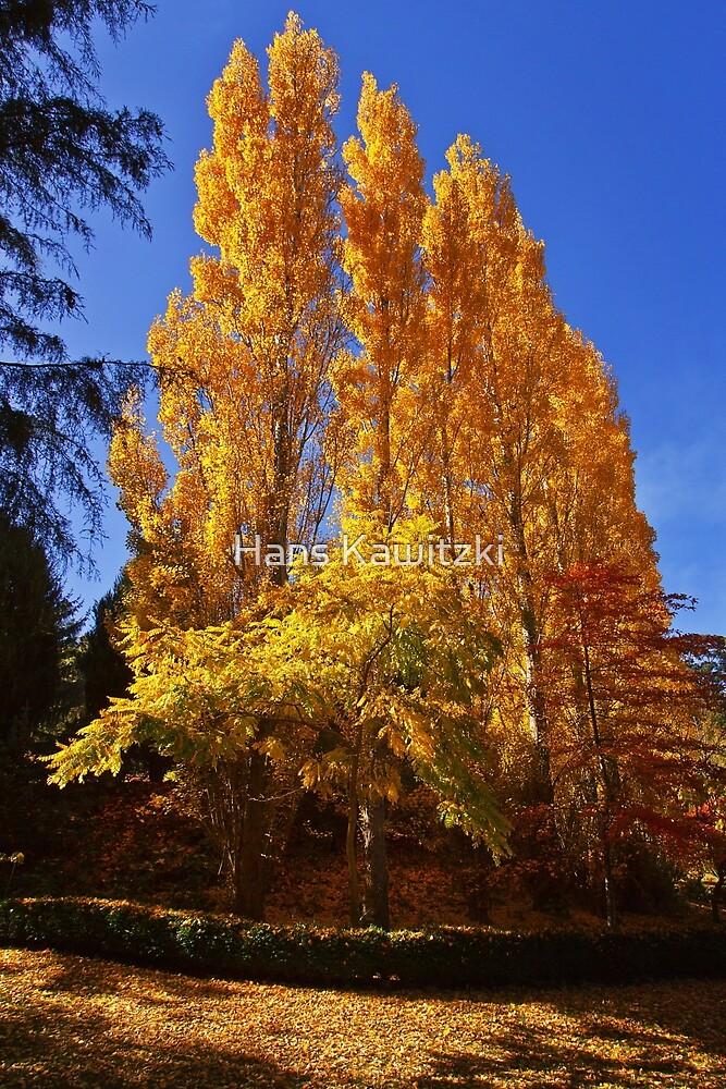 0375 Autumn gold - Mount Macedon by Hans Kawitzki